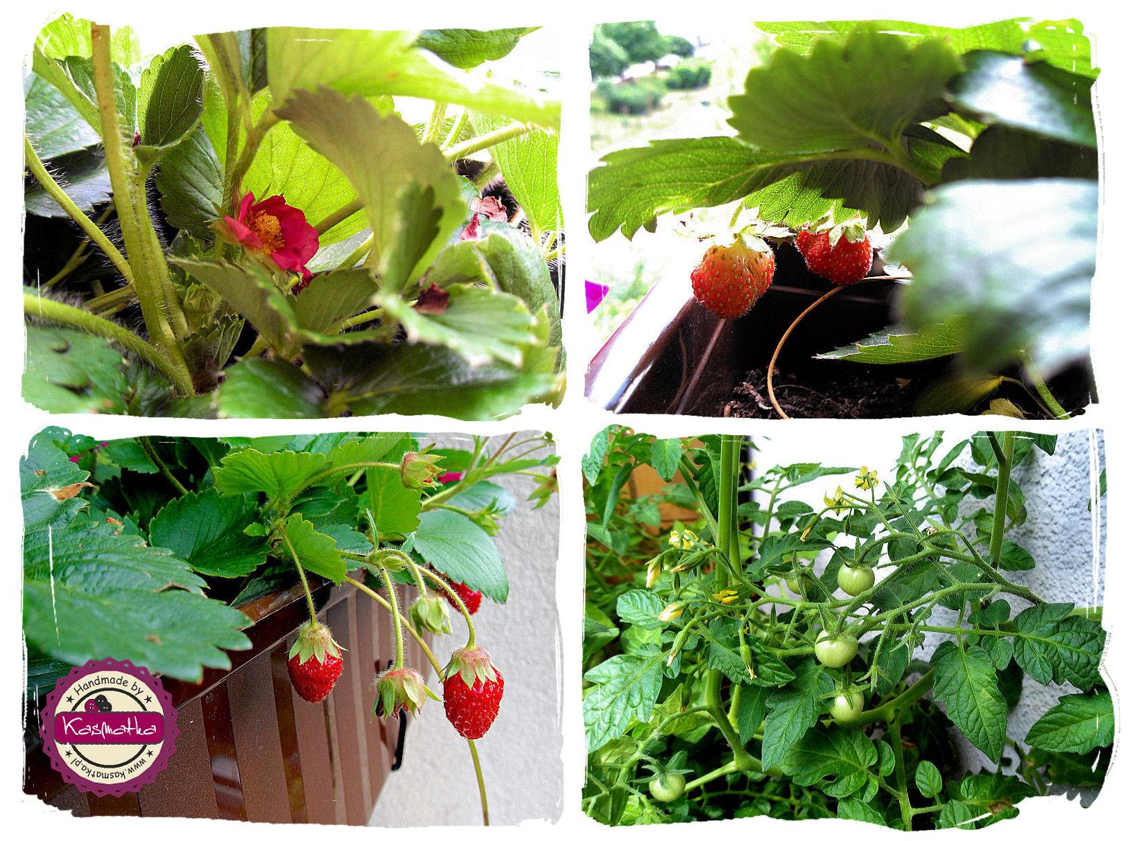 truskawki, pomidor