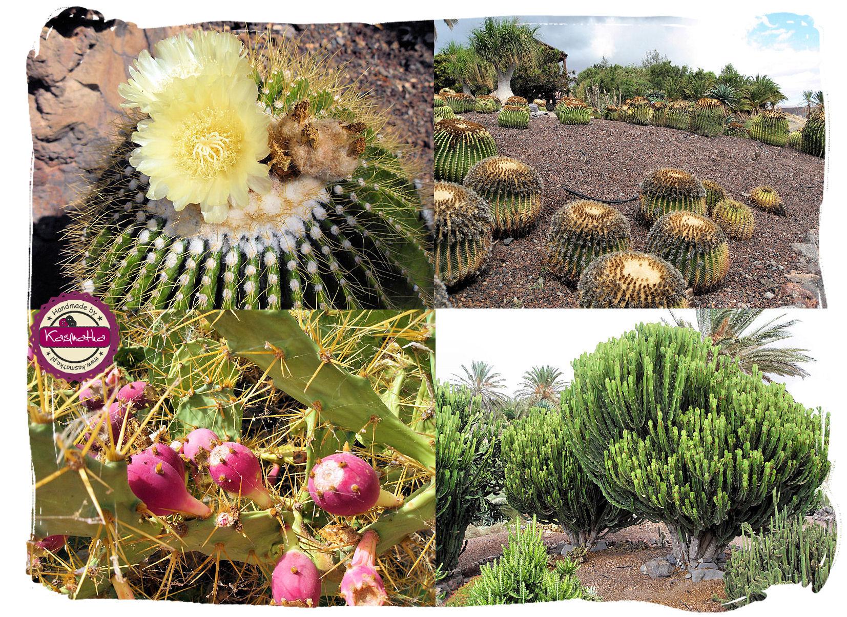 oasis park kaktusy kolaz