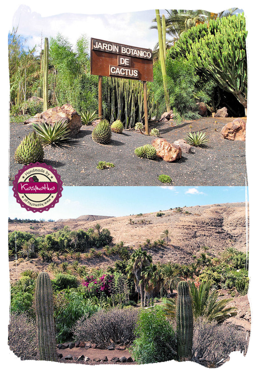 oasis park kolaz