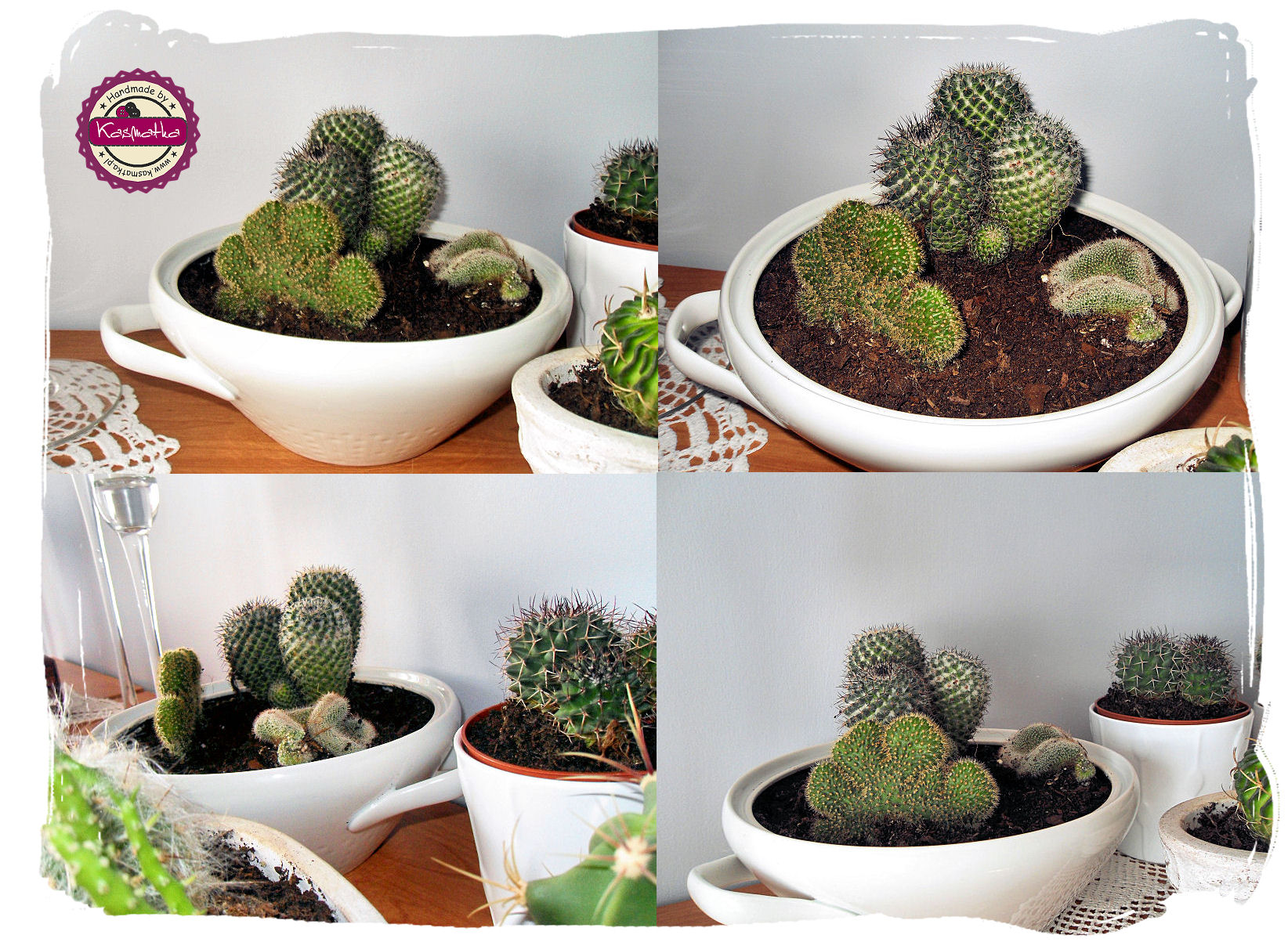 kaktusykolaz