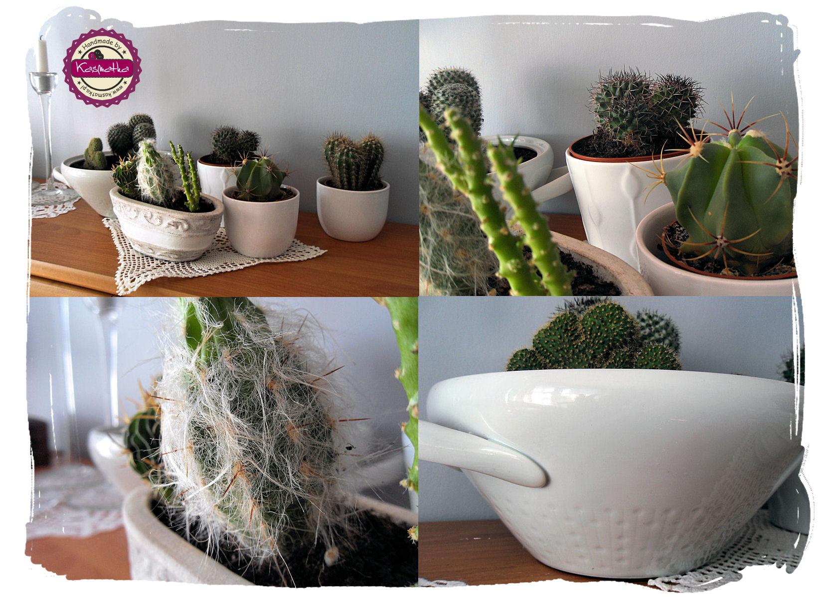 kaktusykolaz2