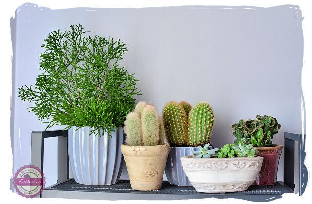 kaktusy aranzacja