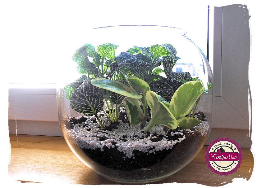 terrarium w kuli