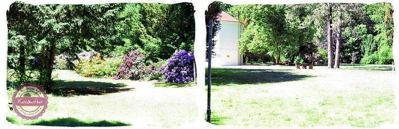 park w korniku
