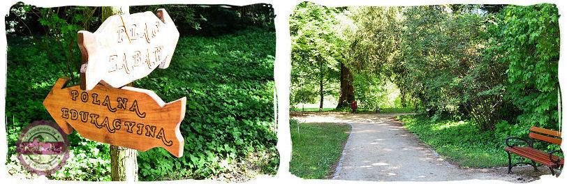 przyroda w arboretum kornickim
